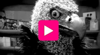 Themcrookedvultures-buzz-paris-vautour